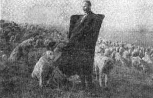 Підсумки vi всесоюзної виставки 1930 року - вітчизняні породи службових собак азіатського