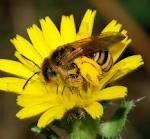 Про вулики, будинки для бджіл а - питання і відповіді за алфавітом