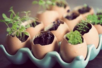 9 Відмінних ідей використання яєчної шкаралупи!