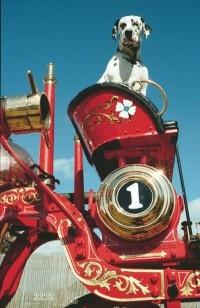 Далматинці на пожежній службі - пожежні машини обладнання, поставки, виробництво