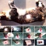 Как помочь пописать коту в домашних условиях 295