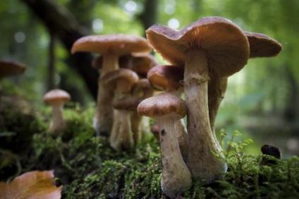 Melyek a leggyakoribb jelek a gombák, és miben különböznek a növények és állatok