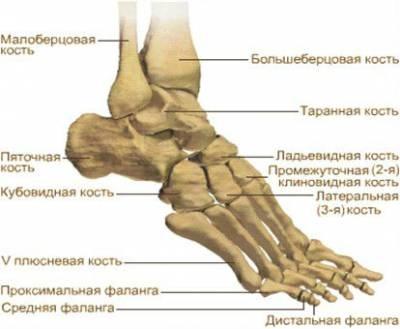 fájdalom ízületek láb