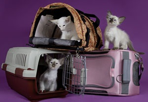 A sejt hordozó macskáknak