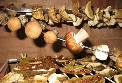 Hogyan száradni gombát otthon
