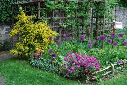 Левкой (матіола) фото квітів, вирощування з насіння, посадка і догляд у відкритому грунті