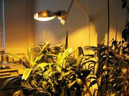 Що таке светокультура яку лампу використовувати для підсвічування розсади і кімнатних рослин