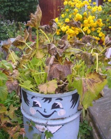 Нові вироби для саду та городу своїми руками