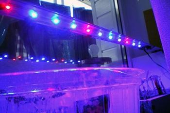 Світлодіодні лампи для рослин як вибрати фітолампи