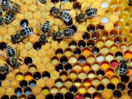 Méz és a lopás védelmi módszerek