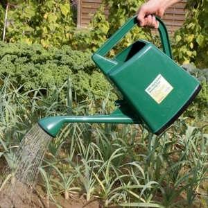 Ixia ültetés és gondozás az otthoni és a szabadban (fényképek és videók)