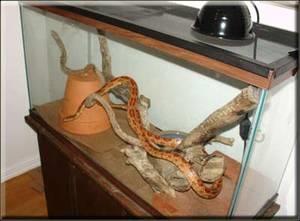 Как сделать домашнего змея 967