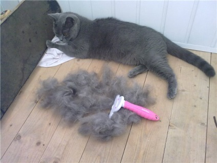 У кота постоянно лезет шерсть