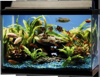 Mi a legfontosabb szabály a kezdő akvaristák szabályok akvarista
