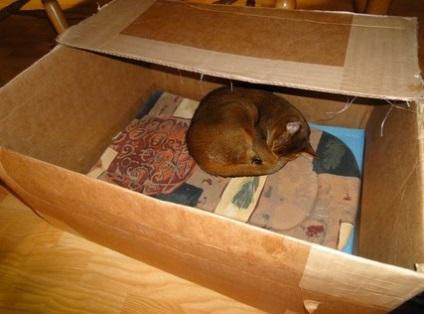 Гнездо для кошки своими руками фото 26