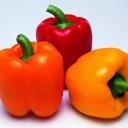Omlett paradicsom, paprika, sajt - recept fotókkal - patee