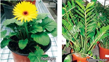Догляд за квітами після покупки