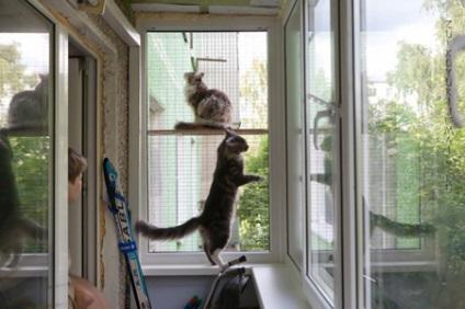 Сетка на окно для кошек своими руками 60