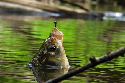 Калушанин закликає зберегти рибу міському озері