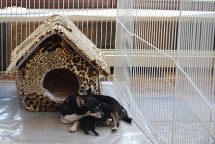 Салон краси для тварин стрижка собак і кішок Шарлотт and Меггі в москві