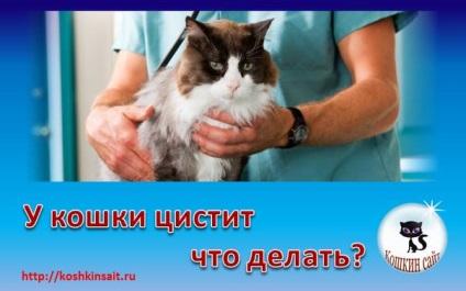 Как лечить цистит у котов в домашних условиях 498