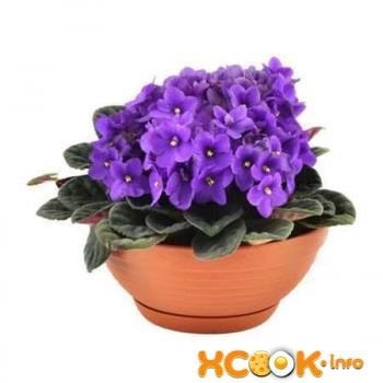 Virág ibolya - leírás képpel növények; előnyei és hátrányai; receptek