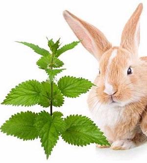 Nettles nyulaknak adhatok hozzá egy növény állat diéta