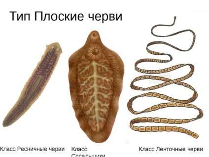 Ascaris és pinworm kezelés milyen szenzáció a férgekkel