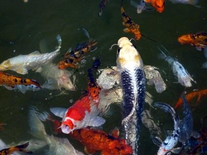 Типові помилки, які можуть призвести до погіршення якості води в водоймах, фото неправильна