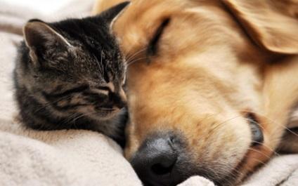 Árpa előtt egy kutya - mi a teendő, és kezelése