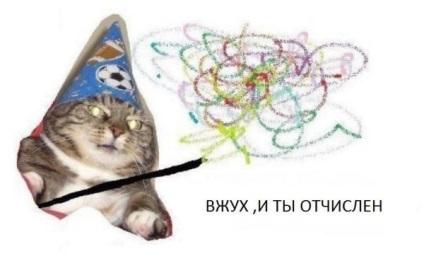 Кот вжух в чому прикол чий кіт де дивитися все меми з котом вжух