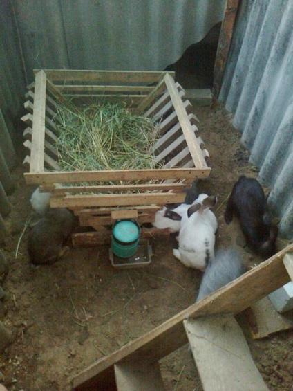 Выращивание кроликов в загонах 48