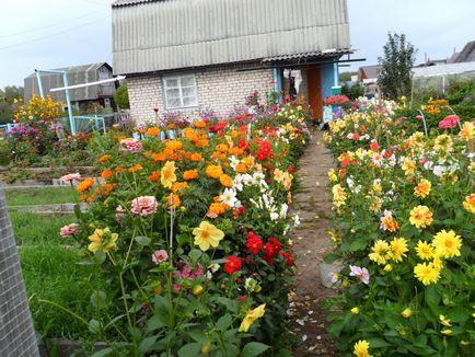 Сажать цветы на даче фото и название 598