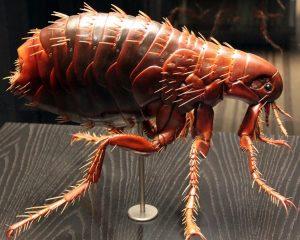 parazita az ablakpárkányon