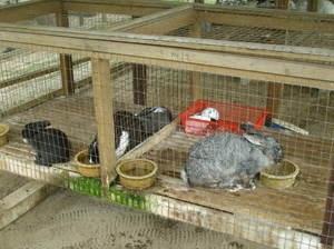 Выращивание кроликов зимой 15