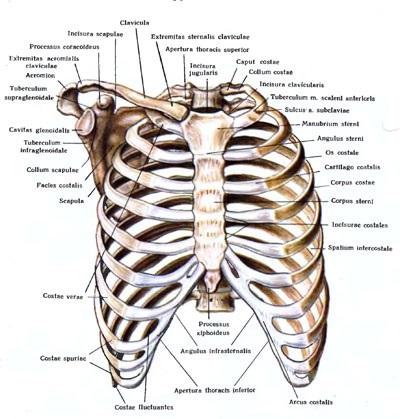 Болит правое ребро спереди при нажатии