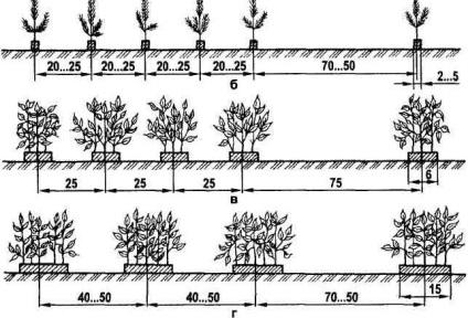 Методы выращивания леса 16