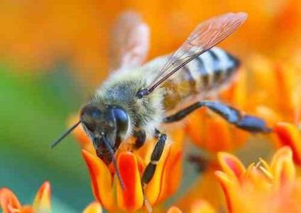 Hol ülnek a méhek prosztatagyulladással? Prosztatagyulladás a volán mögött