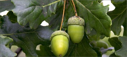 Выращиваем Священную Рощу. Первое дерево Listvenniederevyarossiipyatsamixrasprost-384b36a6
