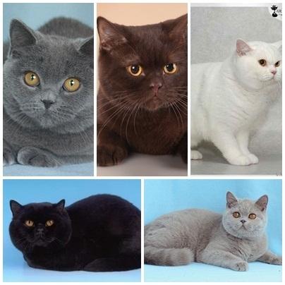 Чому у кішки бувають кошенята трьох різних кольорів
