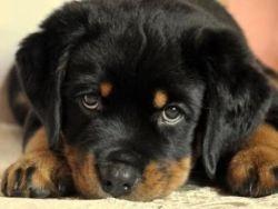 A bélférgesség tünetei és kezelése kutyáknál