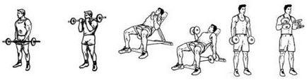 Najlepsze ćwiczenia na biceps, ramię rozwój mięśni