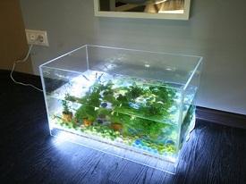 Настольный аквариум своими руками 989