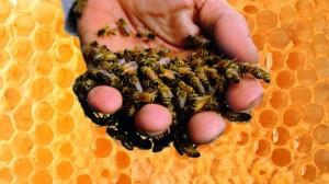 Prostatitis méhek eljárása Info prosztatitis