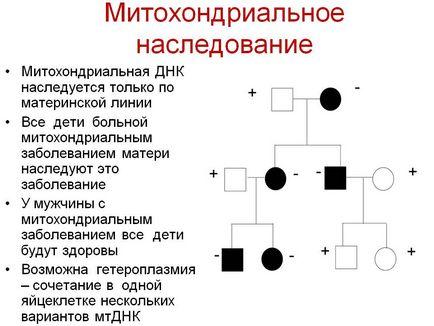 boli mitocondriale (tsitopatii)