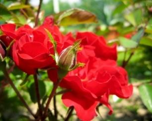 Jak wyhodować kwiat na parapecie - porady, instrukcje,