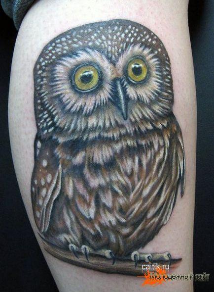 Znaczenie Sowa Tatuaż Zdjęcia Tatuaż