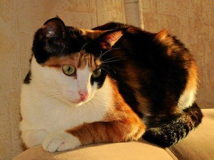 flörtöl macskák)