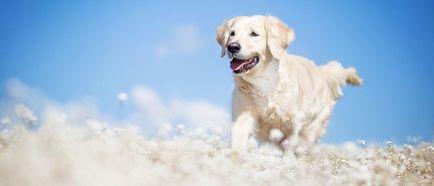 Защо мечтата на един порочен куче, което се втурва и иска да хапе