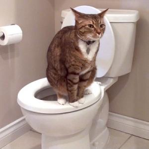 Кръв в урината на котка, котка или котенце - на причините, за диагностика и лечение